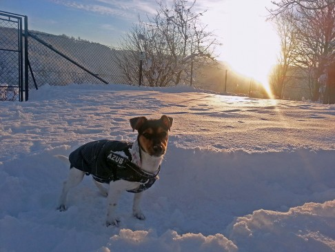 Pepe im Schnee