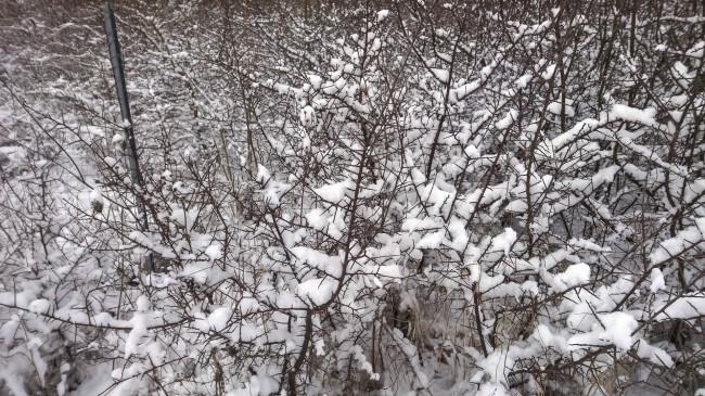 2014-12-29-Winter-12