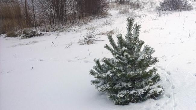 2014-12-29-Winter-4
