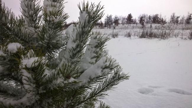 2014-12-29-Winter-5