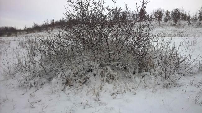 2014-12-29-Winter-6