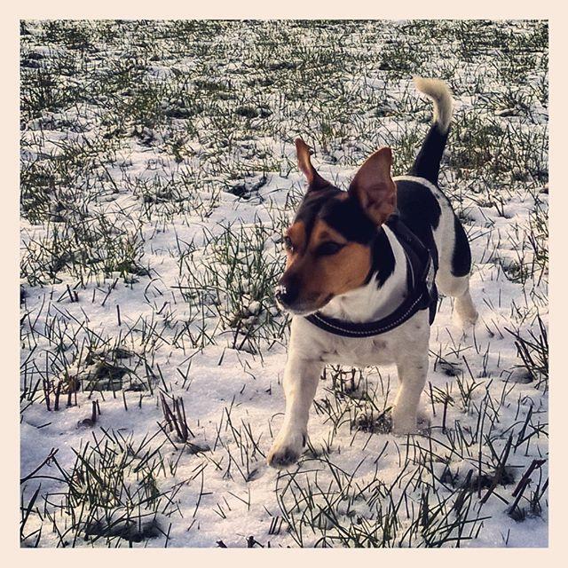 Endlich #Winter und zumindest ein bisschen #Schnee