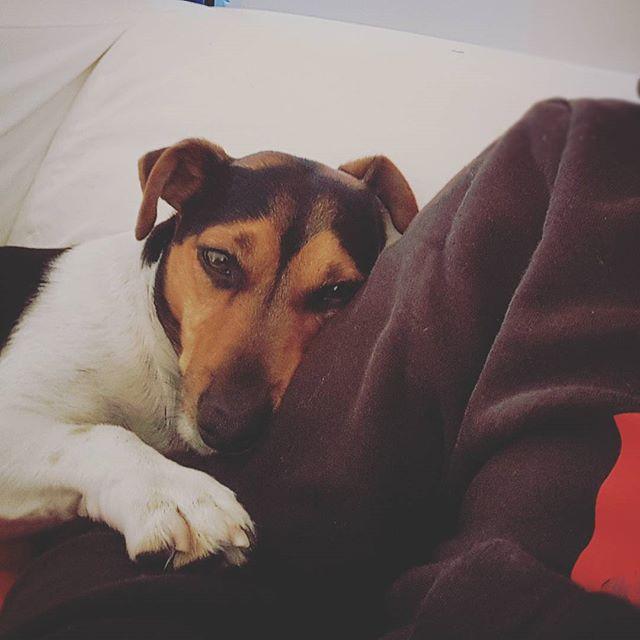 #Sonntag #kuschelhund