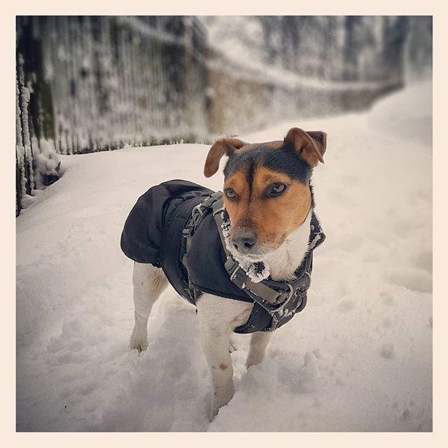Schnee, Schnee, Schnee und Pepe #Winter #dog