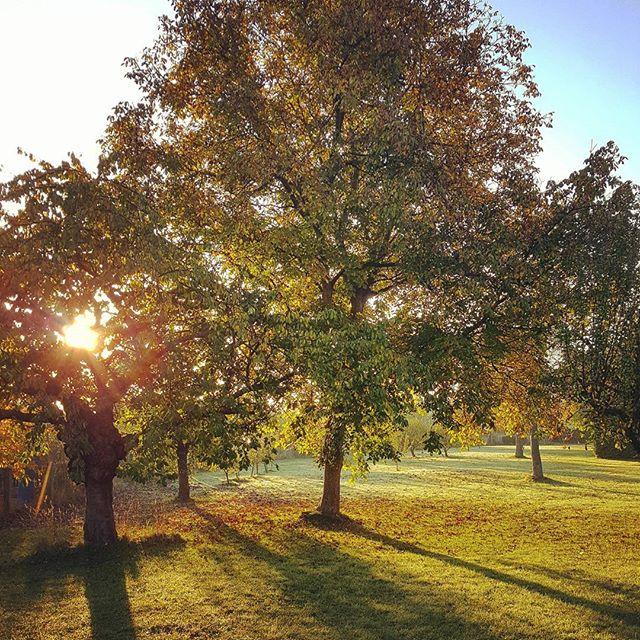 Ein schöner Anblick zum frühen Morgen  #sonntag #sunrise #Herbst