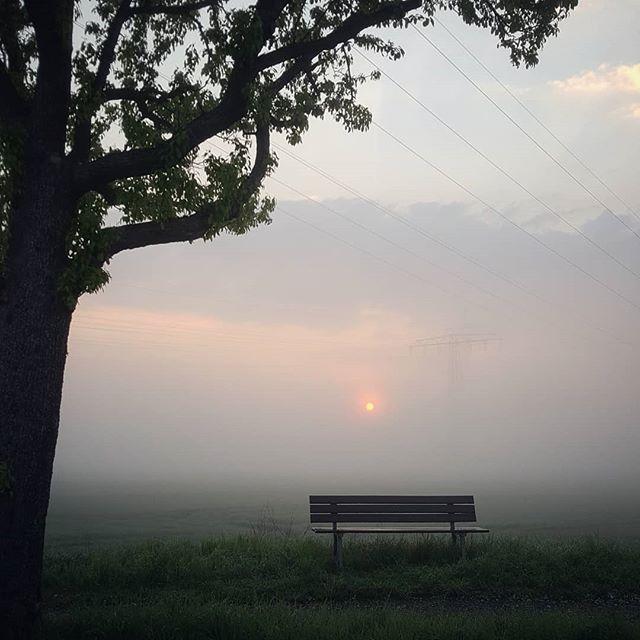 Morgenstimmung... Die #Sonne bahnt sich ihren Weg durch den #Nebel #bekannterdichter