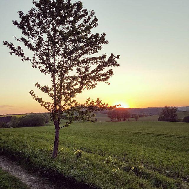 #Baum #Sonnenuntergang #sunset