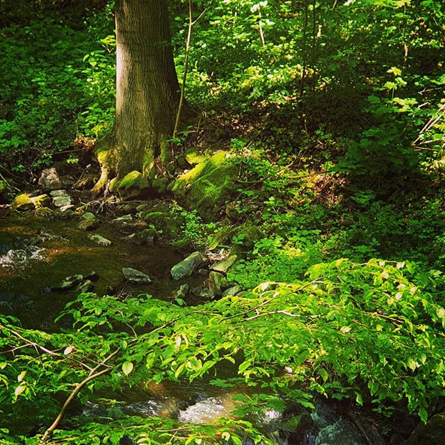 Im #Wald #inthewoods